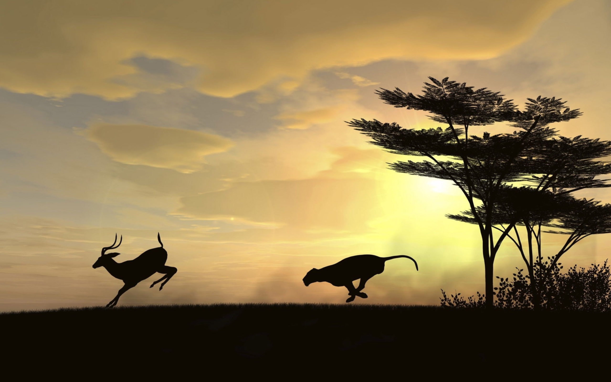 Lion hunts gazelle